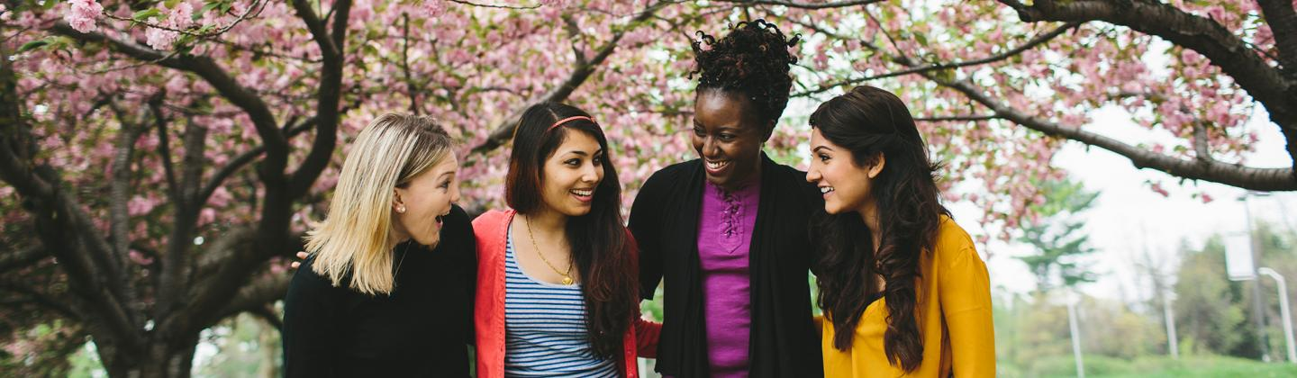 Four Students Under Cherry Blossom
